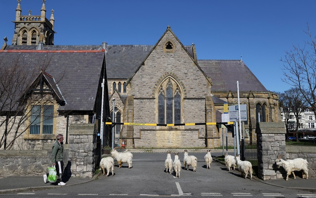 Goats are seen outside a church in Llandudno, Wales, Britain, March 31, 2020. A herd of Kashmir goats invaded the Welsh seaside resort after the coronavirus lockdown left the streets deserted. REUTERS