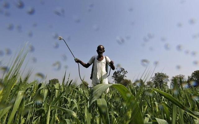 A farmer sprays a mixture of fertilizer and pesticide onto his wheat crop on the outskirts of Ahmedabad. REUTERS/Amit Dave/Filesb