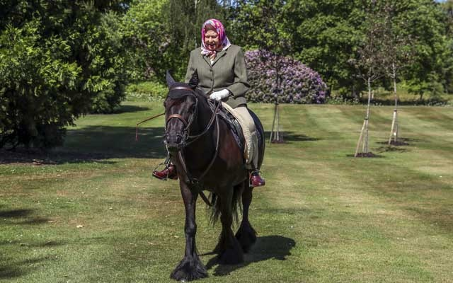 Britain's Queen Elizabeth II rides Balmoral Fern, a 14-year-old Fell pony, in Windsor Home Park, following the outbreak of the coronavirus disease (COVID-19), in Windsor, Britain, in this undated pool picture released on May 31, 2020. Steve Parsons/Pool via REUTERS