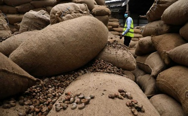 A worker checks the cashew nut bags at a warehouse, amid the global coronavirus disease (COVID-19) outbreak, in Abidjan, Ivory Coast May 13, 2020. REUTERS