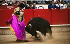 Jose Tomas confronts a bull in the final corrida of the season at the Plaza Monumental in Barcelona, Spain, on Sunday, Sept 27, 2009. The New York Times