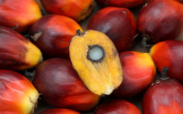 FILE PHOTO: A palm oil seed is seen at a plantation in Pulau Carey, Malaysia, January 31, 2020. Reuters