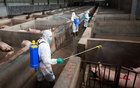 Local husbandry and veterinary bureau workers in protective suits disinfect a pig farm as a prevention measure for African swine fever, in Jinhua, Zhejiang province, China August 22, 2018. Reuters