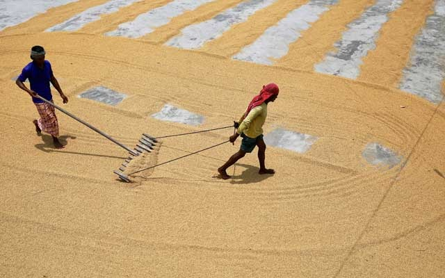 Workers sun dry paddy at a rice processing mill after reopening amid concerns over the coronavirus disease (COVID-19) outbreak in Munshiganj, outskirts of Dhaka, Bangladesh, July 8, 2020. Reuters