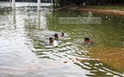 Homeless children are playing at the capital's Rabindra Sarobar premises, a popular recreational area which was submerged after days of incessant rainfall saw the adjacent Dhanmondi Lake overflow.