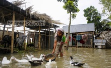 How to live with the floods? Ask Shamsunnahar of a remote village