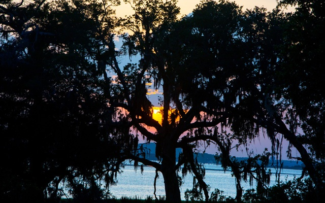 FILE — Oak trees at Cumberland Island National Seashore in Georgia, May 29, 2017. During the pandemic, many of the visitor centres, museums, historic buildings and signature lighthouses have remained closed to the public, but there are a number of national seashores and lakeshores with lots of wide opens spaces shores that are conducive to social distancing. (Hunter McRae/The New York Times)