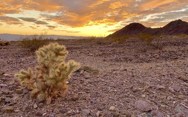 In a photo provided by National Park Service, a sun set in August on a lonely cactus in Death Valley in Southern California. The New York Times.