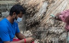 A revival: Bangladeshi jute farmers thrilled by record high prices as exports soar 40pc