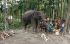 Lalmonirhat woman claims 'divine order' in dream. Her husband buys an elephant