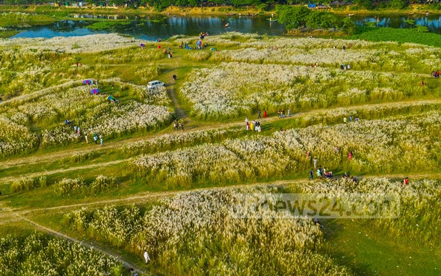 Ainta is an area inside Bashundhara River View Project in Dhaka's south Keraniganj. Catkins have bloomed across the fields adjacent to a small spiral canal. Locals have named the place Sarighat.