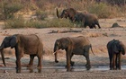 A group of elephants are seen near a watering hole inside Hwange National Park, in Zimbabwe, October 23, 2019. REUTERS