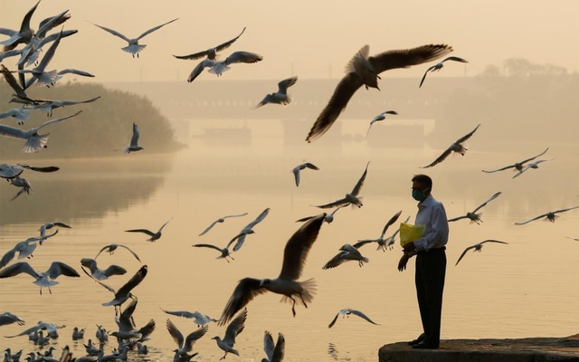 A man feeds seagulls as he stands on the banks of Yamuna river, on a smoggy morning in New Delhi, India October 24, 2020. REUTERS