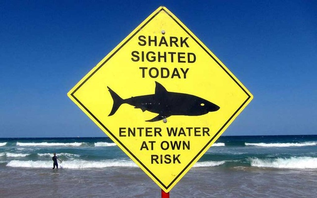 A surfer carries his board into the water next to a sign declaring a shark sighting on Sydney's Manly Beach, Australia, Nov 24, 2015. REUTERS