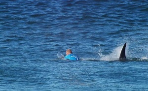 Mick Fanning of Australia is attacked by a shark during the finals of the J-Bay Open in Jeffrey's Bay, South Africa, in this Jul 19, 2015. REUTERS/FILE