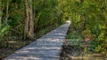 The authorities have built a paved road stretching from the lake to the watchtower inside the Harbaria Eco Tourism Centre in Chandpai Range in the Sundarbans. But a wooden walkway over the road would facilitate the movement of wildlife in the area. Photo: Mustafiz Mamun