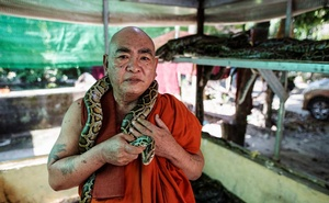Buddhist monk Wilatha poses with a rescued Burmese python at his monastery that has turned into a snake sanctuary on the outskirts of Yangon, Myanmar, Nov 26, 2020. REUTERS