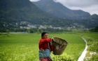 A woman carries a basket as she heads towards her field at Khokana in Lalitpur, Nepal August 18, 2015. REUTERS/Navesh Chitrakar/Files