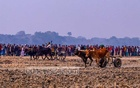 Farmers from faraway places compete in the traditional oxcart race, locally known as 'Gorur Garir Daborh' on paddy fields after the harvest at Fulshara in Jashore's Chougachha Upazila on Friday, Jan 15, 2021. A H M Mottaleb