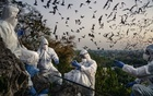 A team of researchers catch bats as they fly out of the Khao Chong Phran cave at dusk near Photharam District in Ratchaburi Province, Thailand, Dec. 11, 2020. The cave complex at a temple in Thailand has long drawn tourists, pilgrims and guano collectors. Now, scientists have arrived, looking for any potential links to the coronavirus. (Adam Dean/The New York Times)