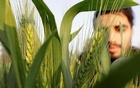 A farmer tends to wheat at a field in El-Dakahlya governorate, Egypt Feb 7, 2021. REUTERS