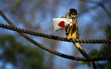 Black capped squirrel monkeys are fed treats from Valentines Day themed bags during a photo-call at ZSL London Zoo in London, Britain, Feb 10, 2021. REUTERS