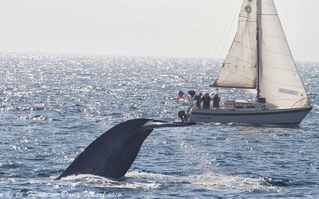 In an undated photo from Dana Wharf Sportfishing & Whale Watching, whale-watchers off Dana Point, Calif. The New York Times