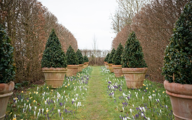 """Crocuses on the cricket pitch at Monty Don's two-acre garden, Longmeadow, in Herefordshire, England, March 4, 2021. """"Gardeners' World"""" and Don, its star, have been a balm for frayed nerves. (Francesca Jones/The New York Times)"""
