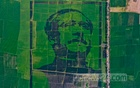 The National Council on Father of the Nation Bangabandhu in Crop Field Image implemented the work to draw the image in association with private organisation National Agricare to celebrate his birth centenary.
