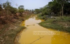 The water of a canal connected to the Turag river in Savar's Bhakurta has turned yellow due to disposal from Dhaka WASA's iron remover plant. The condition of the canal began changing only a few years ago when the WASA set up the canal. Photo: Mahmud Zaman Ovi