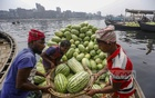 Workers unload watermelons from boats on the Buriganga river at Badamtoli in Old Dhaka.  Photo: Mahmud Zaman Ovi