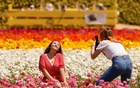 Visitors pose and take pictures among the 50 acres of Ranunculus flowers at