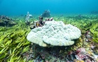 Corals are seen in a seagrass meadow and one of the biggest carbon sinks in the high seas, at the Saya de Malha Bank within the Mascarene plateau, Mauritius March 6, 2021. Greenpeace via REUTERS