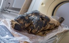 A pregnant Egyptian mummy is pictured during a research work in this undated handout photo. WARSAW MUMMY PROJECT/O. Leydo/Handout via REUTERS