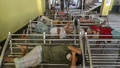 People sleep on benches at the waiting room of a bus counter in Dhaka's Gabtoli Bus Terminal with long-haul passenger transport services suspended for a long time amid a coronavirus lockdown. Photo: Asif Mahmud Ove