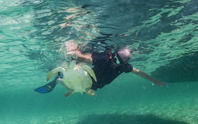 In an image provided by Shane Gross, a green sea turtle mistook a tourist for a snack in Eleuthera, the Bahamas, in 2019. Scientists have warnings about tour operators feeding ocean wildlife to lure them to vacationers. The New York Times