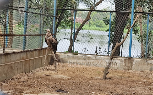 The Bengal species of vulture.
