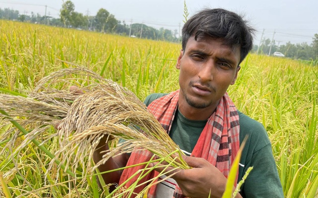 Farmer Manik Mia with his rice crops, which were hit by heat stress in April, in Lalmonirhat, northern Bangladesh, May 8, 2021. Thomson Reuters Foundation
