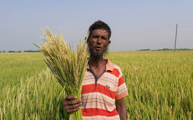 Shafiqul Islam Talukder holds a handful of empty stalks that were ruined after two days of extreme hot, dry air in April, in Kishoreganj district, northeast Bangladesh, May 4, 2021. Thomson Reuters Foundation