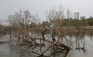 People cut branches off a dried mangrove tree encircling the island of Satjelia in the Sundarbans, India, November 20, 2020. REUTERS