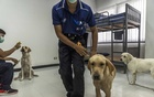 Bobby, Bravo and Angel, left to right, with their handlers at Chulalongkorn University in Bangkok on May 14, 2021. The New York Times