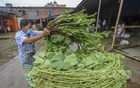 A retailer is organising the spinach he bought from the market on his rickshaw-van. Photo: Asif Mahmud Ove