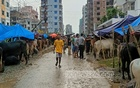 Who is following pandemic health guidelines at Dhaka cattle markets? No one