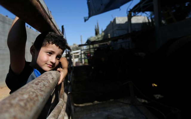 Palestinian boy Adam Issa looks on at a cow farm, in the central Gaza Strip July 14, 2021. Reuters.