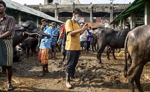 A man uses a video call to show family members sacrificial animals for sale at the Gabtoli Cattle market in Dhaka, Bangladesh, July 20, 2021. Amid a surge in coronavirus cases, farmers and families in Bangladesh have turned to online marketplaces to buy and sell millions of animals for sacrifice during the festival of Eid-ul-Azha. (Fabeha Monir/The New York Times)