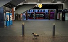 A lone bird walks past the quiet Circular Quay train station during a lockdown to curb the spread of COVID-19 outbreak in Sydney, Australia, July 28, 2021. REUTERS