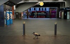 A lone bird walks past the quiet Circular Quay train station during a lockdown to curb the spread of a coronavirus disease (COVID-19) outbreak in Sydney, Australia, July 28, 2021. REUTERS