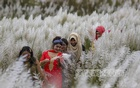 A group of youths can be seen roaming among the fields of catkins at Keraniganj's Sarighat. Photo: Mahmud Zaman Ovi