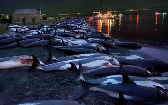 Photo from a Tweet of Canadian singer Bryan Adams shows the dead dolphins. Collected