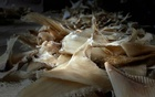 Seized shark fins are placed on the floor after authorities confiscated a shipment of 3,493 shark fins which were to be illegally trafficked to Hong Kong from Bogota's airport, in Bogota, Colombia Sept 23, 2021. Picture taken Sept 23, 2021. Colombian Environment Ministry/Handout via REUTERS